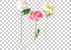 粉红色花卡通,花卉,粉红色家庭,康乃馨,蔷薇,玫瑰秩序,玫瑰,玫瑰