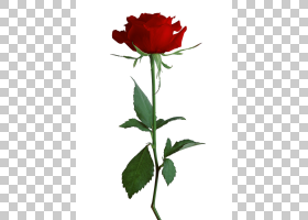 粉红色花卡通,花卉,粉红色家庭,植物茎,切花,芽,蔷薇,花盆,玫瑰秩