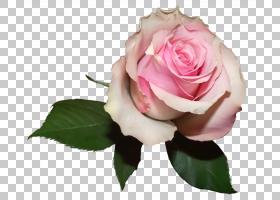 粉红色花卡通,花卉,花束,蔷薇,切花,floribunda,插花,花卉设计,花
