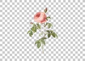 粉红色花卡通,花卉设计,花束,蔷薇,切花,插花,花盆,花瓣,花卉,玫
