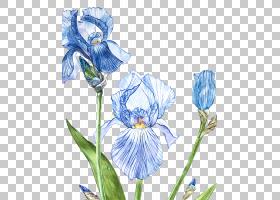清新文艺手绘水彩植物花卉元素免扣装饰插画素材
