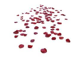 散开的花瓣飘落装饰元素