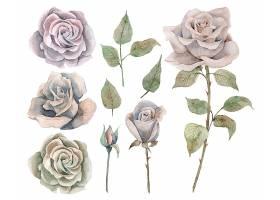 清新手绘单株植物叶子花卉特写