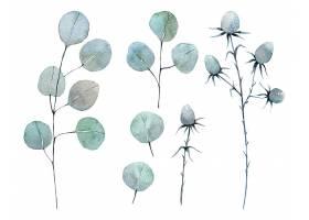 手绘水彩植物叶子主题装饰插画
