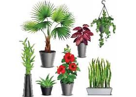 植物盆栽素材
