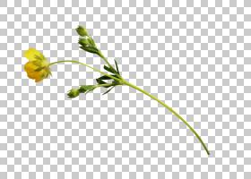 花线艺术,草,线路,植物茎,分支,黄色,树,花瓣,叶,植物群,植物,动
