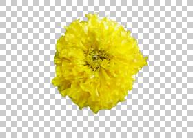 花卉剪贴画背景,金盏花,雏菊家庭,花瓣,向日葵,万寿菊,黄色,花卉,