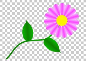 族的图形,线路,植物茎,雏菊家庭,绿色,黄色,黛西,叶,植物群,植物,