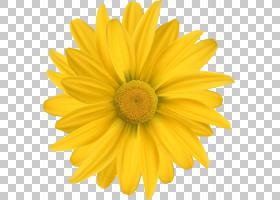 花卉剪贴画背景,非洲菊,玛格丽特黛西,向日葵,雏菊家庭,食用花卉,