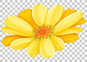 花卉剪贴画背景,非洲菊,玛格丽特黛西,花卉,花瓣,向日葵,橙色,牛