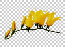 花卉剪贴画背景,黄色,植物群,百合,叶,刷子,植物,植物茎,切花,花