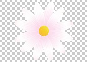 玛格丽特花春花,野花,圆,雏菊家庭,植物,非洲菊,天空,花,黄色,花