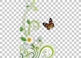 春节花卉背景,飞蛾与蝴蝶,绿色,传粉者,植物群,视觉艺术,线路,昆