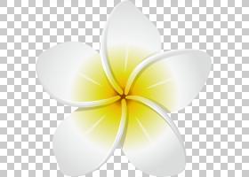 佛兰花,对称性,红色,海报,绿色,普通向日葵,佛兰尼帕尼,花瓣,白色