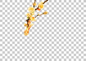 花卉背景,花卉设计,细枝,植物茎,切花,分支,花,黄色,花瓣,植物群,