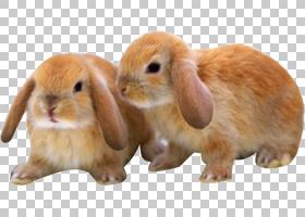 兔子卡通,口吻,兔拖鞋,兽医,宠物,孩子,可爱,母亲,动物,兔子,婴儿图片