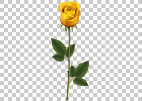 粉红色花卡通,芽,植物茎,切花,黄色,玫瑰秩序,玫瑰家族,植物,花瓣