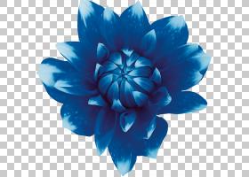 花卉剪贴画背景,切花,青色,花瓣,绿松石,水,靛蓝,绿色,莲子,植物,