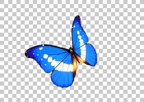 3D背景,机翼,刷脚蝴蝶,飞蛾与蝴蝶,昆虫,钴蓝,传粉者,对称性,蓝色