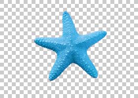 海洋卡通,水,绿松石,资源,免费,蓝色,海,海星,