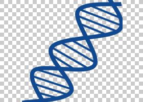 双螺旋,鞋,黑白,线路,鞋类,符号,文本,面积,角度,电蓝,表观遗传学