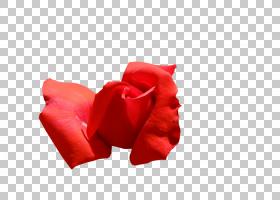 花卉剪贴画背景,植物,关门,玫瑰秩序,玫瑰家族,红色,花,花园,花瓣