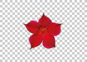 花卉剪贴画背景,植物,切花,洋红色,花瓣,花,红色,USB集线器,计算