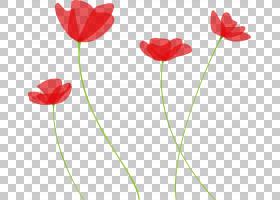 红花植物茎郁金香植物,海葵,罂粟家族,玉米罂粟花,Coquelicot,花
