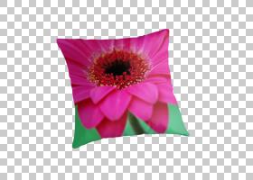 红花,非洲菊,扔枕头,植物,洋红色,德兰士瓦雏菊,花瓣,花,垫子,扔