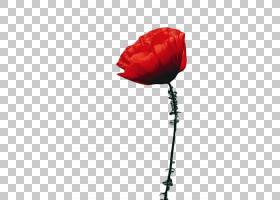 花卉剪贴画背景,玫瑰秩序,切花,静物摄影,郁金香,罂粟家族,芽,玫