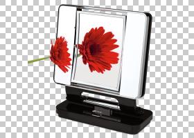 红花,媒体,多媒体,计算机监视器,电视,花,技术,红色,虚荣,放大倍