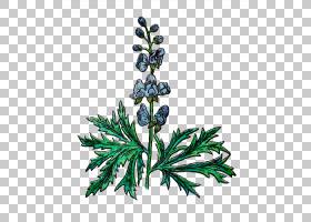 红花,杜松,卢平,亚灌木,美国落叶松,分支,飞燕草,红柏,附子,植物,