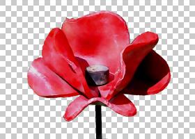 粉红色花卡通,多年生植物,洋红色,仙客来,蛾兰,海葵,Coquelicot,