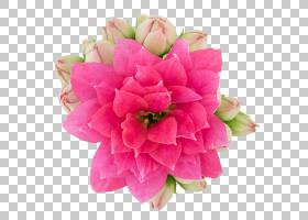 粉红色花卡通,插花,桃子,蔷薇,洋红色,植物,牡丹,花束,红色,人造