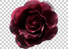 粉红色花卡通,植物,蔷薇,玫瑰秩序,紫罗兰,洋红色,紫色,粉红色,玫
