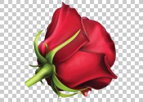 粉红色花卡通,植物茎,芽,关门,水果,玫瑰秩序,玫瑰家族,植物,花瓣