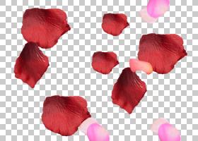 粉红色花卡通,玫瑰家族,红色,贴纸,花卉设计,Albom,玫瑰,粉红色,