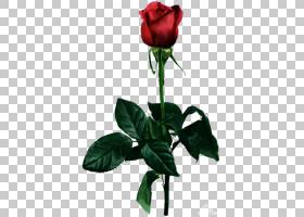 粉红色花卡通,花卉,种子植物,芽,花盆,花瓣,植物茎,蔷薇,玫瑰秩序