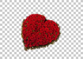 粉红色花卡通,粉红色家庭,玫瑰秩序,花卉,心,花瓣,玫瑰家族,玫瑰,