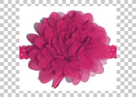 粉红色花卡通,粉红色家庭,花瓣,洋红色,红色,PNK,花序梗,复古风格