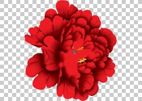 粉红色花卡通,花卉设计,粉红色家庭,一年生植物,切花,康乃馨,草本