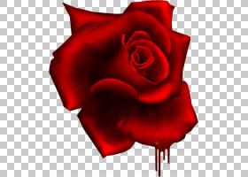 粉红色花卡通,花瓣,种子植物,切花,玫瑰秩序,玫瑰家族,植物,Ping,