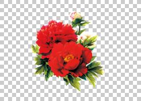 粉红色花卡通,草本植物,花卉,花束,粉红色家庭,一年生植物,插花,