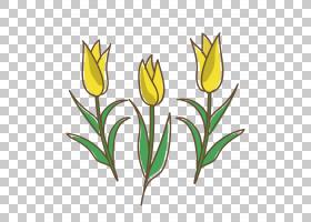 白百合,百合家族,种子植物,植物,粉红色,花瓣,颜色,植物茎,切花,