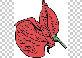 甜豆花,红色,植物茎,树,花瓣,食物,叶,植物,水彩画,藤蔓,绘图,花,