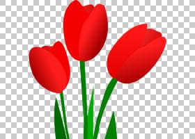爱的背景心,植物茎,种子植物,百合家族,花瓣,爱,植物,心,计算机,