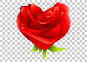 破碎的心表情符号,红色,花瓣,玫瑰秩序,玫瑰,玫瑰家族,花园玫瑰,