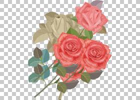 粉红色花卉背景,红色,花卉,插花,floribunda,蔷薇,玫瑰秩序,玫瑰