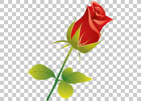玫瑰叶,植物茎,种子植物,芽,玫瑰秩序,玫瑰家族,叶,植物,花瓣,颜