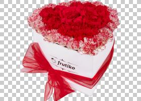 粉红色花卉背景,石竹,花卉设计,插花,花卉,花瓣,粉红色家庭,玫瑰